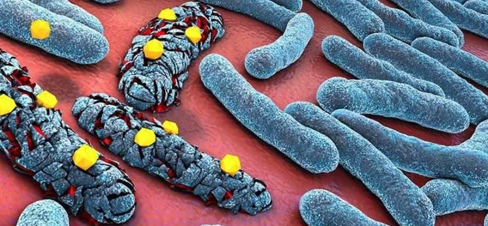 Menghilangkan Bakteri dan Jamur